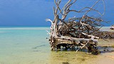 Gold Rock Beach - Bahamas - Tourism Media