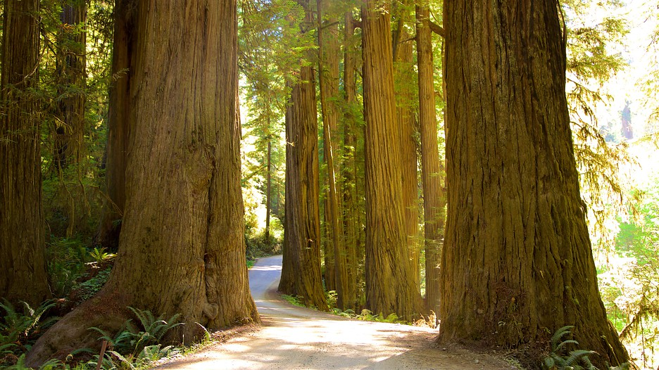 Redwood National And State Parks Vacation Packages July
