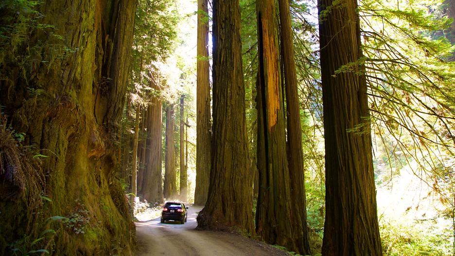 Hotels Near Redwood National And State Parks