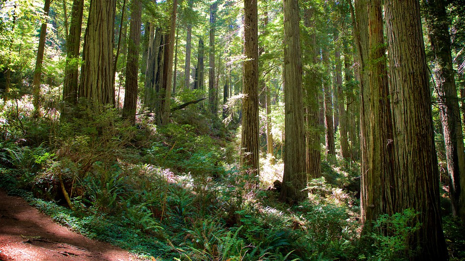 The Best Redwood National And State Parks Vacation
