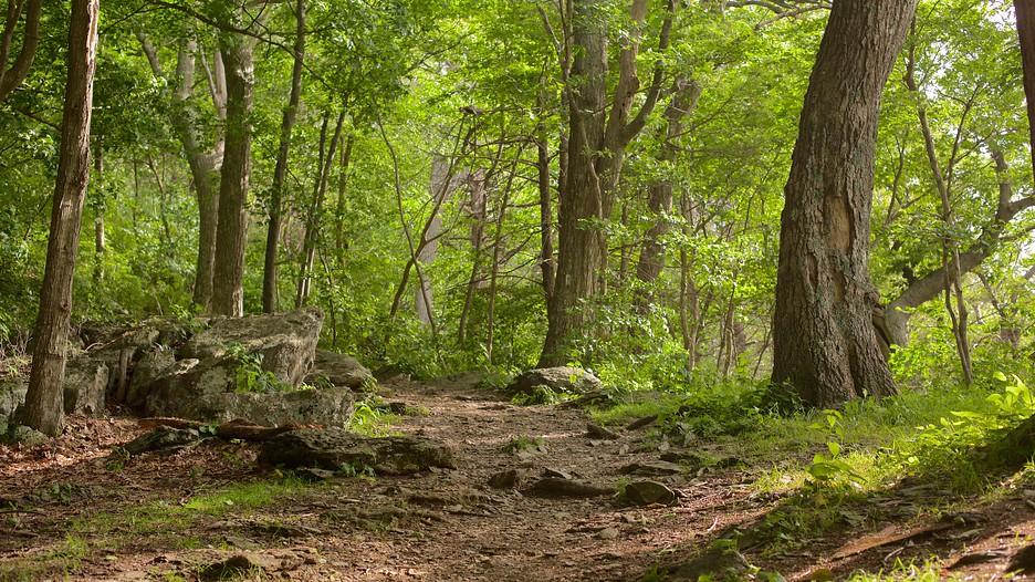 Shenandoah National Park Vacations 2017 Package Amp Save Up