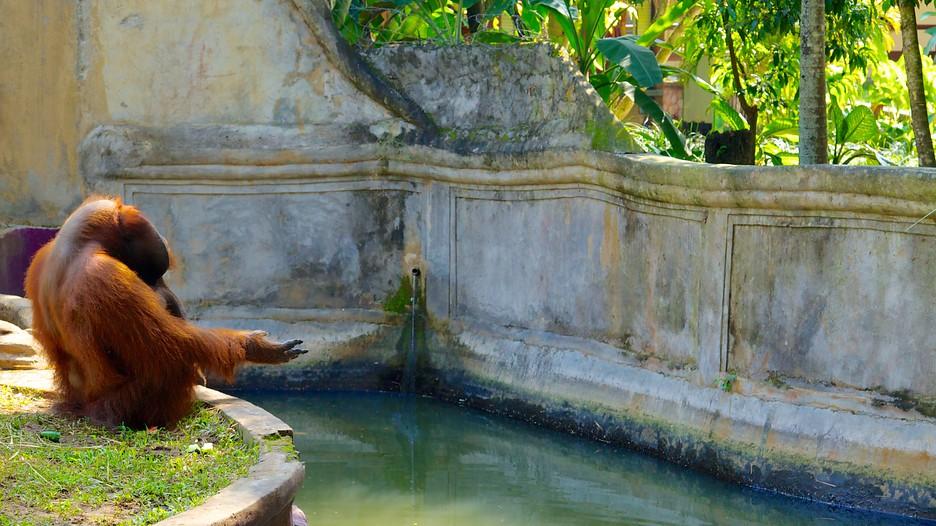 Bali Zoo - Sukawati, Attraction | Expedia.com.au