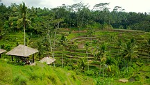 Tegallalang Village - Indonesia