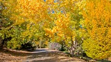 Rancho San Rafael Park - Nevada - Tourism Media