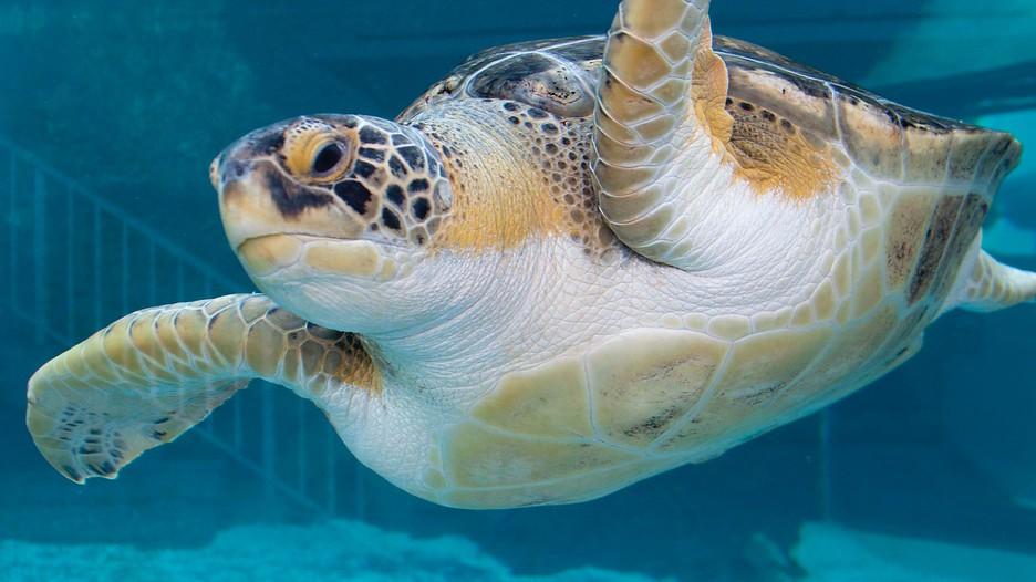 Mote Marine Aquarium In Sarasota