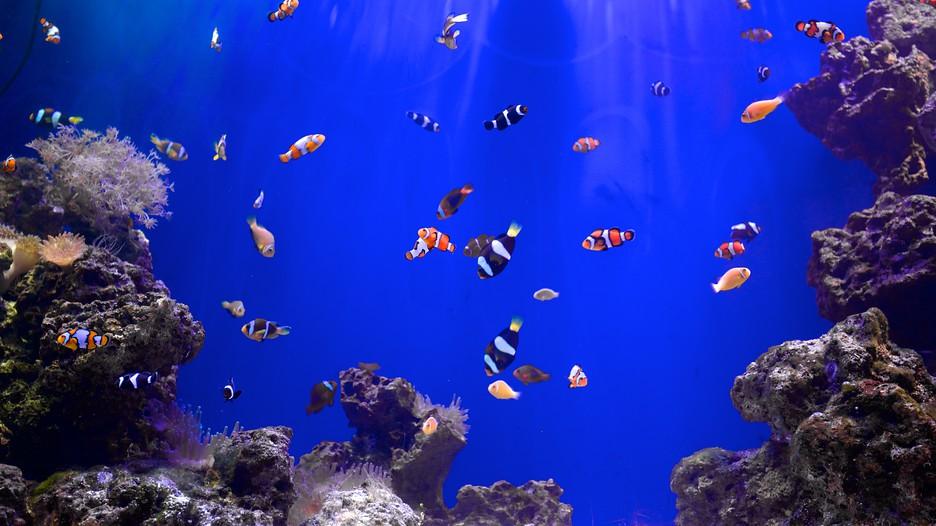 Mote Marine Aquarium In Sarasota Florida Expedia