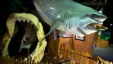 Aquarium of Niagara - Niagara Falls - Tourism Media