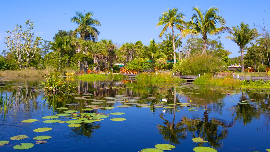 Naples botanical garden in naples florida expedia - Botanical gardens naples florida ...
