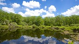Six Mile Cypress Slough Preserve - Fort Myers - Tourism Media