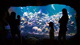 Virginia Aquarium and Marine Science Center - Virginia Beach - Tourism Media