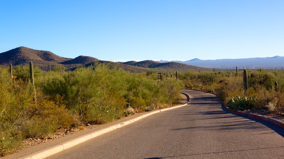 Last Minute Hotel Deals Tucson