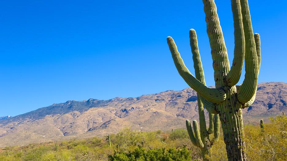 Saguaro National Park In Tucson Arizona Expedia