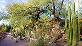 Tucson Botanical Gardens - Tucson - Tourism Media