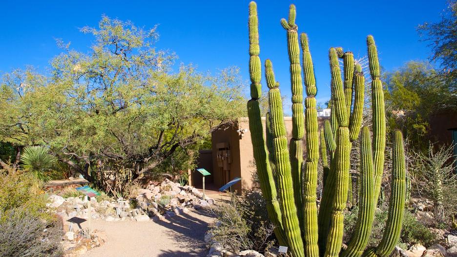 Tucson Botanical Gardens In Tucson Arizona Expedia