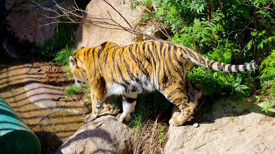 Cheyenne Mountain Zoo In Colorado Springs Colorado Expedia