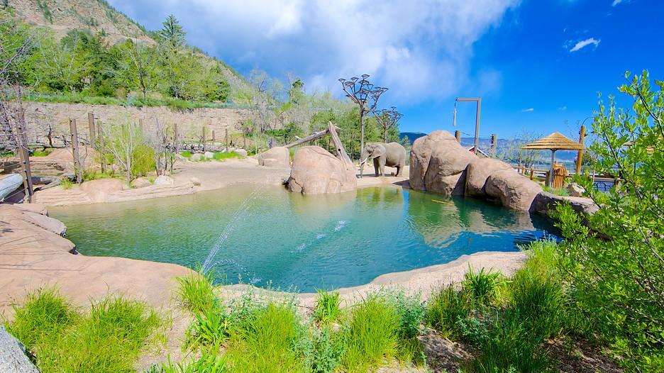 cheyenne mountain zoo in colorado springs colorado expedia. Black Bedroom Furniture Sets. Home Design Ideas