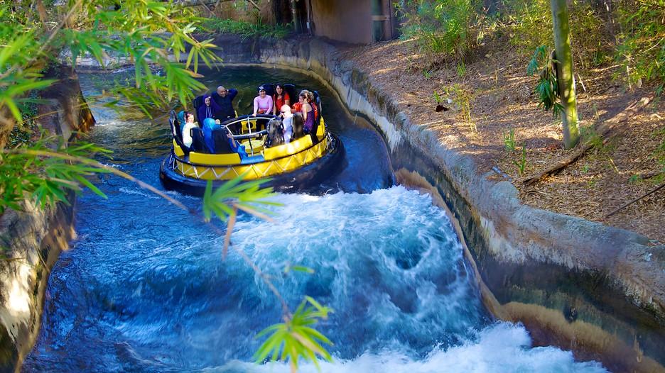 Busch Gardens Tampa Tampa