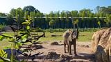 Lowry Park Zoo - Tampa - Tourism Media