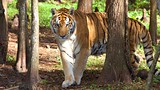 Big Cat Rescue - Tampa - Tourism Media