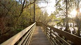 Lettuce Lake Park - Tampa - Tourism Media