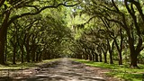 Wormsloe Historic Site - Savannah - Tourism Media