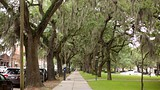 Savannah - Tourism Media