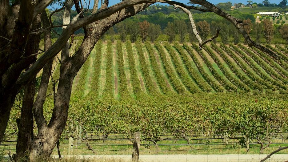 D Arenberg Wines Mclaren Vale  expedia Co In