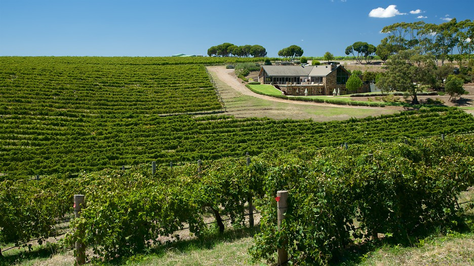 Cheap Wine Tours Mclaren Vale
