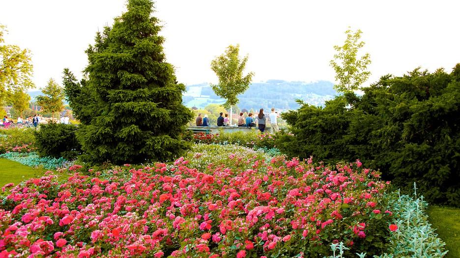 Bern Rose Garden In Bern Expedia