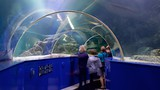 Blue Reef Aquarium - Newquay - Tourism Media