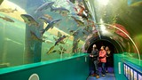 Lakes Aqaurium - Cumbria - Tourism Media