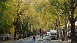 Holland Park District - Londra (e dintorni) - Tourism Media
