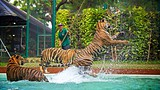 Showing item 45 of 90. Tiger Kingdom Phuket - Phuket - Phang Nga - Tourism Media