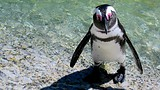 Boulders Beach - Cape Town - Tourism Media