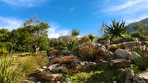 Kirstenbosch National Botanical Garden - Cape Town