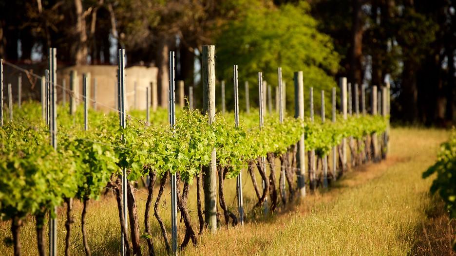 Cheap Wine Tours Margaret River