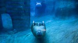 Point Defiance Zoo and Aquarium - Tacoma - Tourism Media