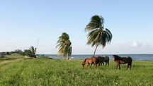 Dangriga - Belize