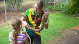 Snakes Downunder Reptile Park - Childers - Tourism Media