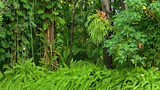 Hervey Bay Botanic Garden - Urangan - Tourism Media