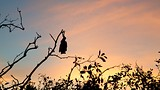Ross Creek Flying Fox Colony - Yeppoon - Tourism Media