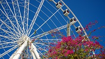 Wheel of Brisbane - South Brisbane