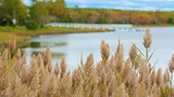 Stone Bridge Farm - Southeast Massachusetts - Tourism Media