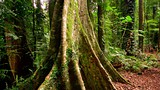 Dorrigo National Park - Dorrigo - Tourism Media