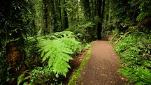 Dorrigo National Park - Dorrigo