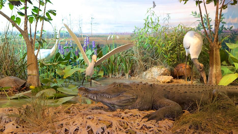 Everglades National Park Ecosystem Overview: Top of the ...  |Everglades National Park Ecosystem