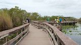 Anhinga Trail - Everglades National Park - Tourism Media