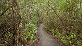 Gumbo Limbo Trail - Everglades National Park - Tourism Media