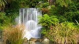 Rainbow Springs Kiwi Wildlife Park - Rotorua - Tourism Media