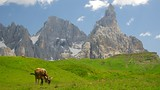 Passo Rolle - Italy - Tourism Media